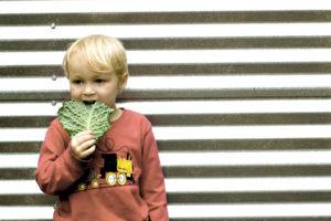 hoyt leaf_hi